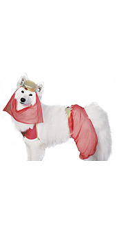 Pet costume Harem Dog